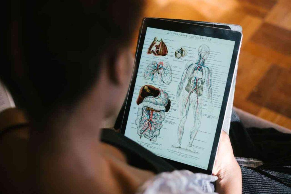 jak se učit anatomii