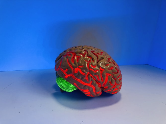 jak funguje mozek, jak funguje paměť